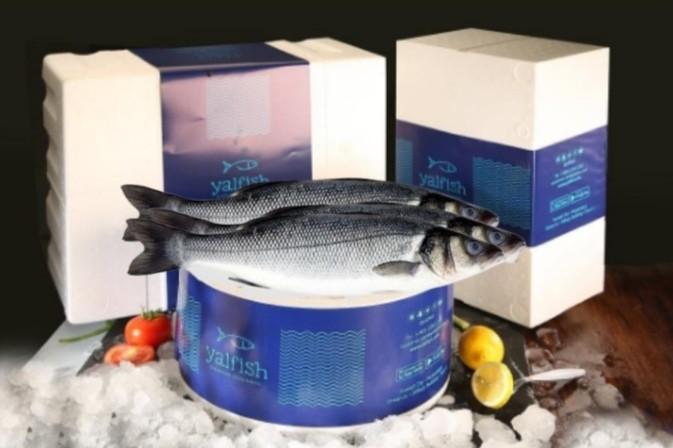 Seabass-Box offer