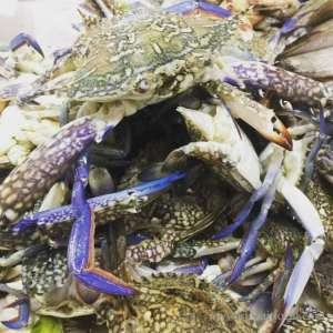 Crab - Male